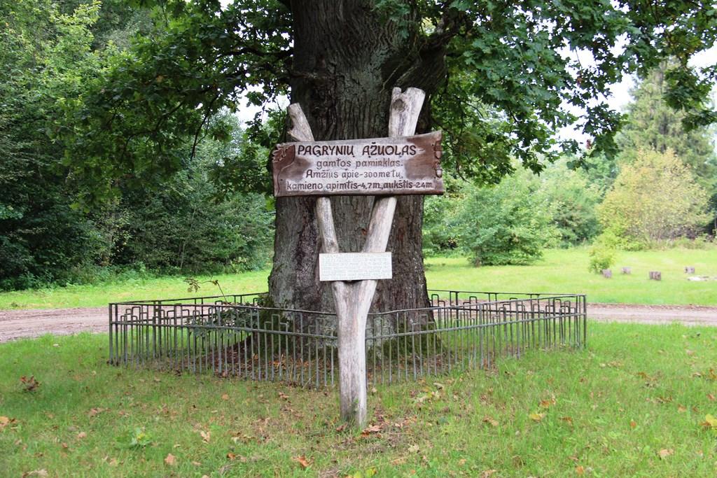 Informacinė lenta prie Pagrynių ąžuolo